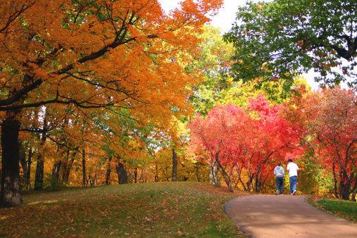 Autumn stroll.