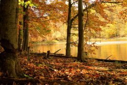 Autumn scenic landscape collection at Catoctin Mountain Park in Thurmont, Maryland USA