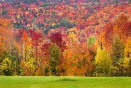 Autumn foliage during peak fall season in Vermont