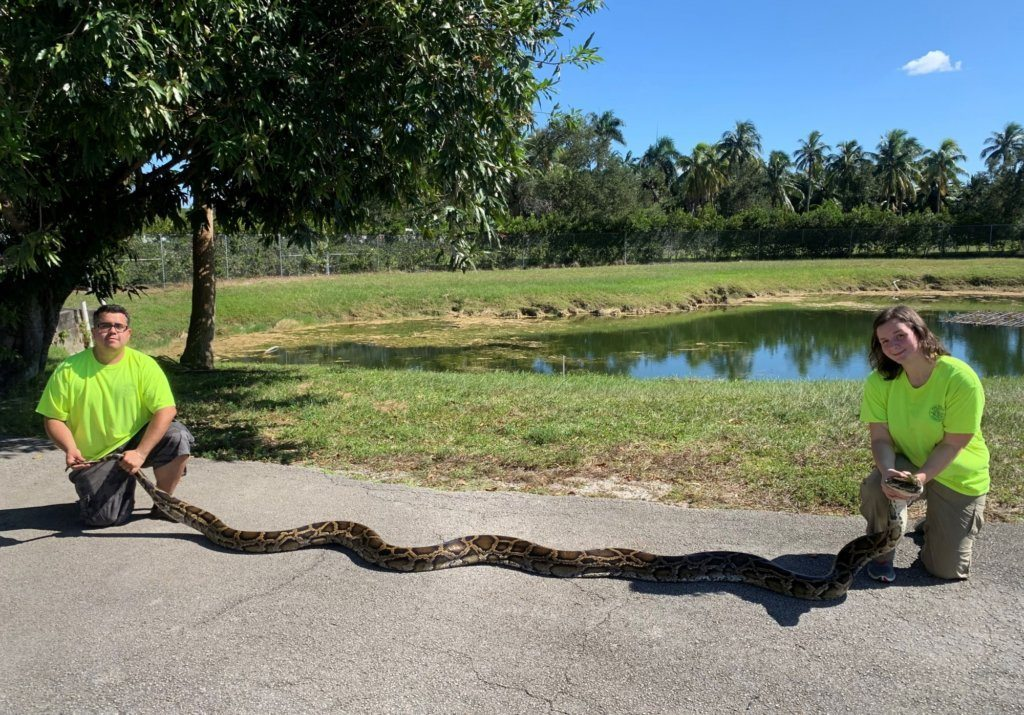 Python Action Team Record Snake