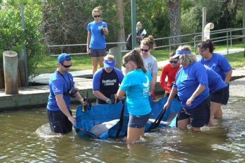 SeaWorld releases rescued manatee back into Florida waters