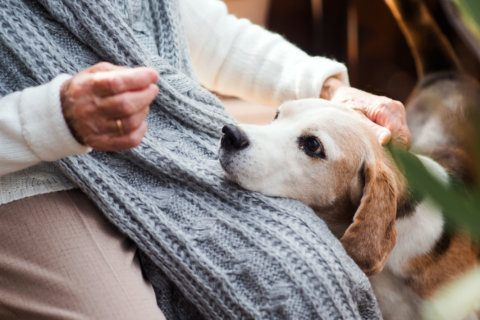 The value of pet ownership for older adults