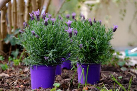 Garden Plot: Don't leave plants in pots outdoors over winter