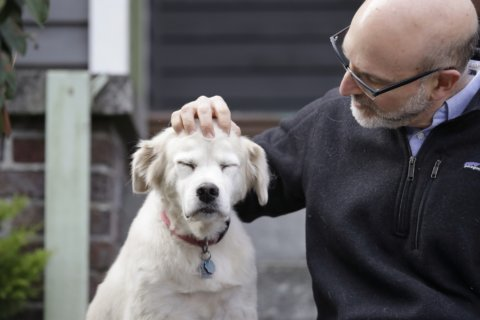 Old dogs, new tricks: 10,000 pets needed for science
