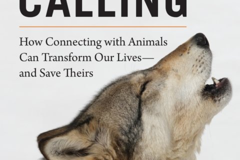 Author endeavors to show how animals relate to humans
