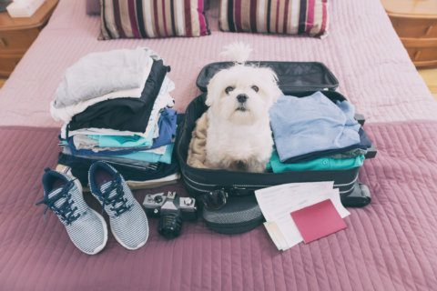 Travel successfully with your pet