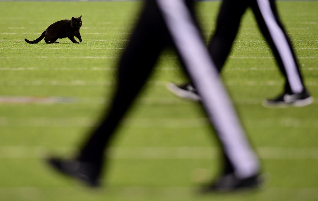 Monday Night Game Delayed By Black Cat In Second Quarter Wtop
