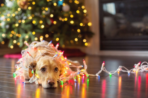 Where do your pets fit in with your holiday plans?