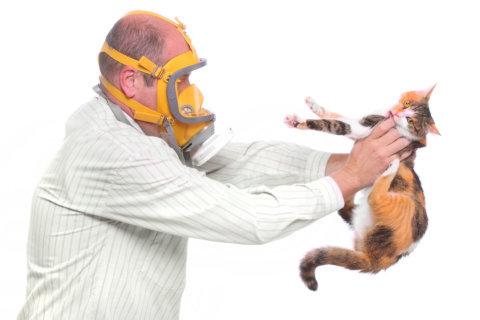 Cat allergy: New treatments