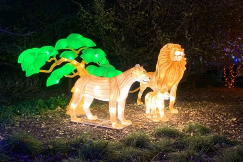 ZooLights brings glowing animal lanterns, virtual reality experience to the National Zoo