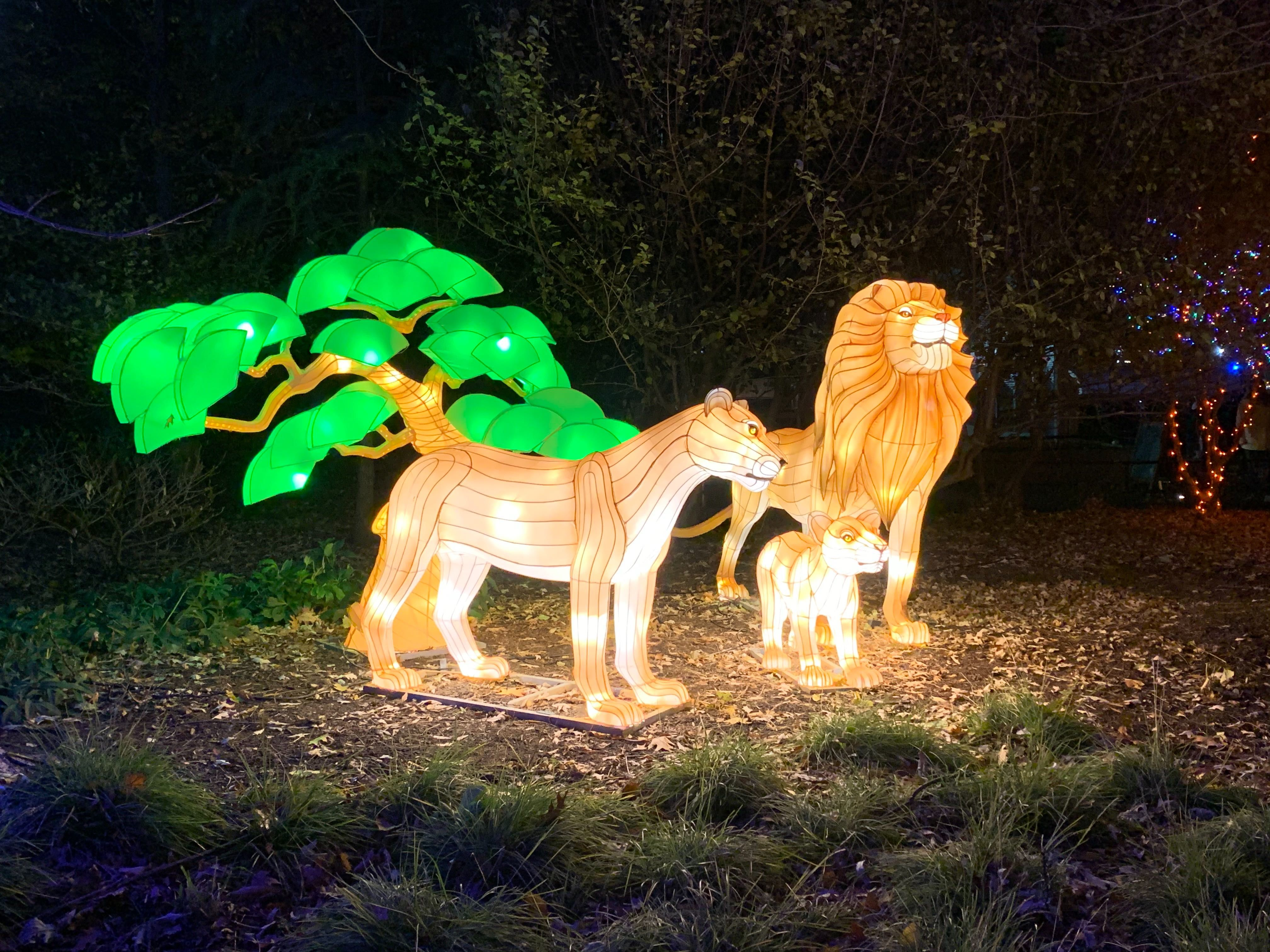 Dc Zoo Christmas Lights 2020 ZooLights brings glowing animal lanterns, virtual reality