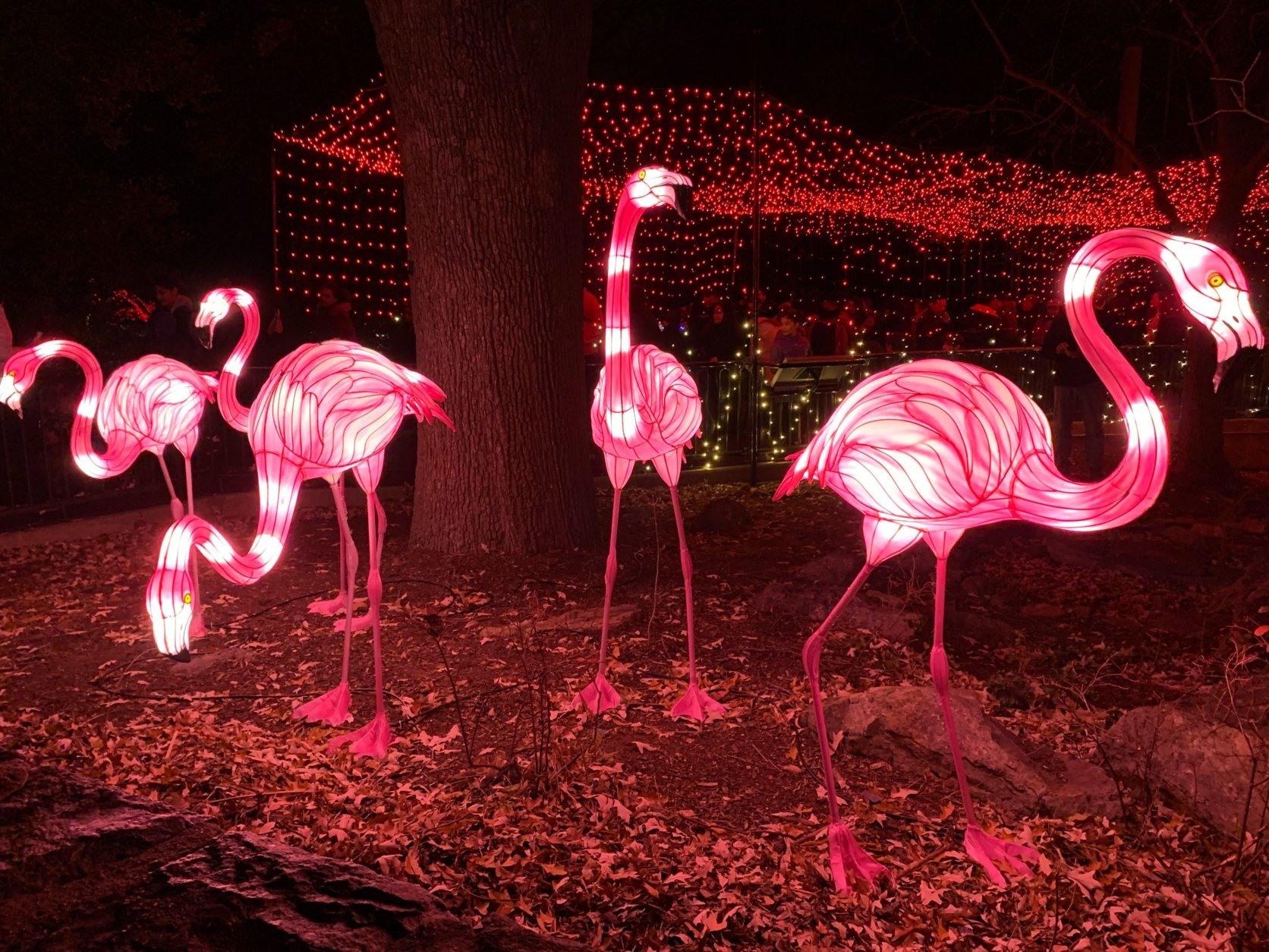 ZooLights returns to the National Zoo from Nov. 29 until Jan. 1.