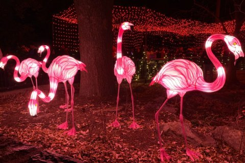 Multiple incidents in and near National Zoo lead to enhanced security during ZooLights festival