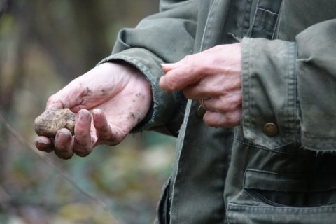 Italy's white truffle hunters worry about climate change