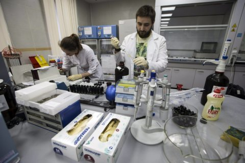 Doping report obtained by AP shows depths of Russia cover-up
