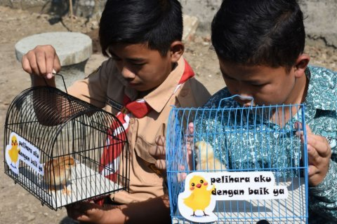 'Chickenization' program gives chicks to kids to fight internet addiction