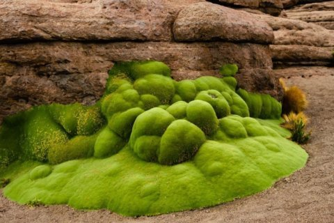 Where to see the oldest living things on Earth