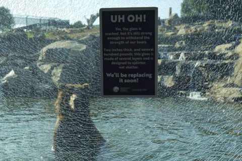 Oakland Zoo: Child, not grizzly bears, cracked glass window