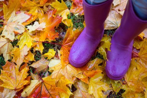 Wet hot American … autumn? This October was one of the warmest and wettest