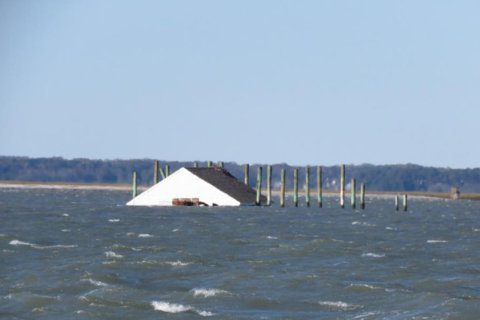 Chincoteague's famous cabin finally floats away