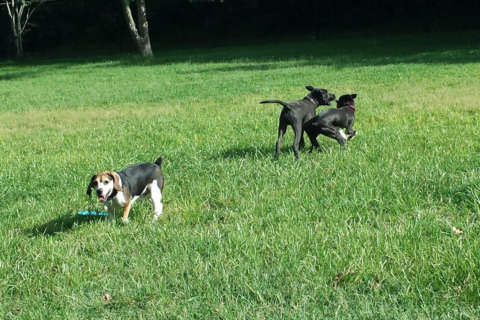 Dog parks: What do you want in Fairfax County?