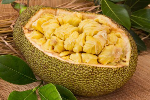 What is jackfruit and how do I use it?