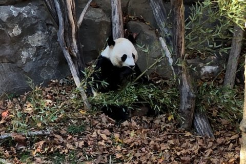 bei bei national zoo