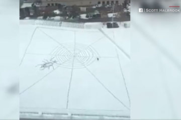 Giant snowy spiderweb spotted from Ohio hotel room