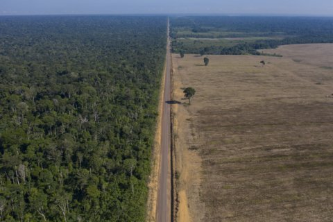 Preservation or development? Brazil's Amazon at a crossroads