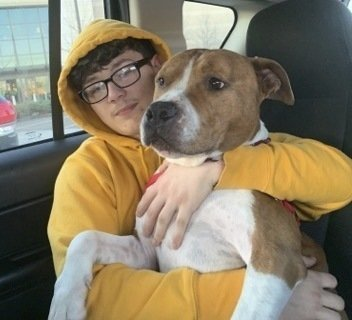 Stolen pit bull to make cross-country trip back home