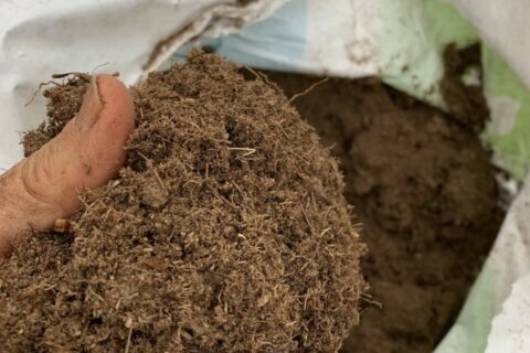 Consider easy, more sustainable alternatives to peat moss