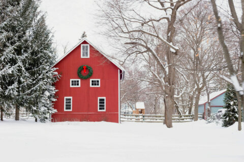 Want to see a White Christmas this year? Pack your bags
