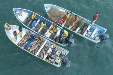 Fishermen mass to overwhelm Mexico's protected porpoises