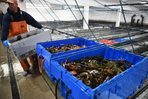 How a Maine lobsterman got over Trump's China trade war