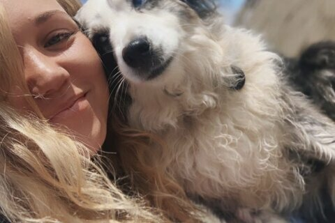 California woman offers $7K reward, hires plane in search of stolen dog
