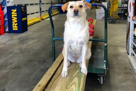 Man offers $10K for safe return of stolen dog named Bella