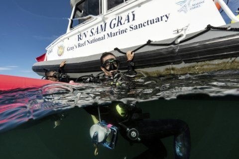 How a small stretch of ocean stirred a conservation movement