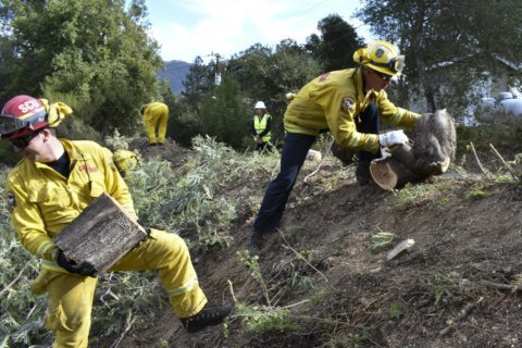 Forest thinning to stop wildfires as strong as weakest link