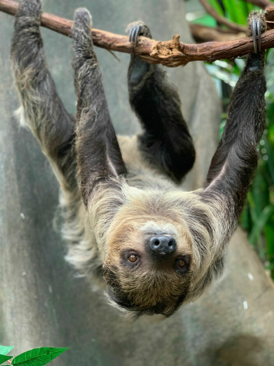 Taking it slow: National Zoo's new arrival a result of zookeeper matchmaking