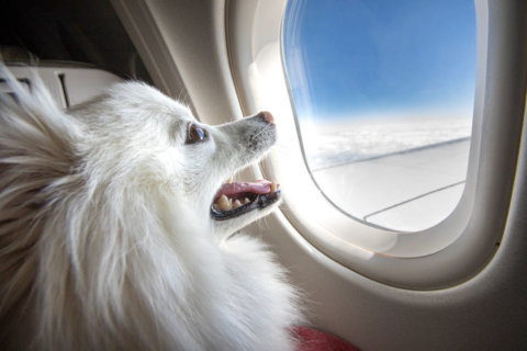 How to travel with pets this holiday
