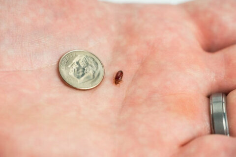 Pest company says DC now No. 1 for bedbugs