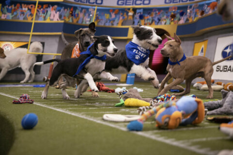 It's time for the Puppy Bowl! Here's everything you need to know