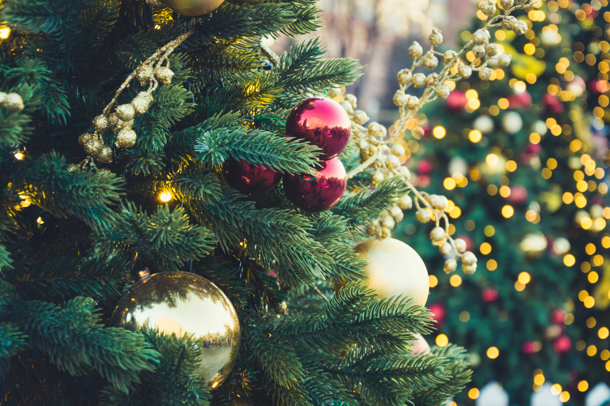 Howard County Christmas Tree Pickup 2020 How to dispose of your Christmas tree and holiday greenery in 2020