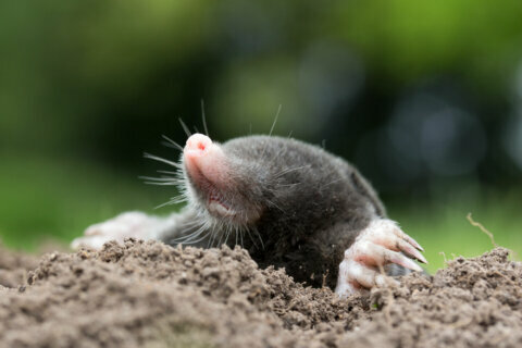 Garden Plot: Moles, voles, bugs and seeds