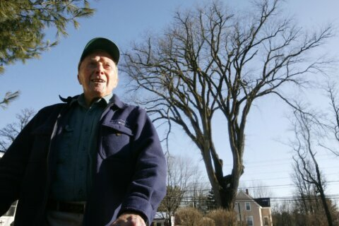 Clones help famous elm tree named Herbie live on, for now