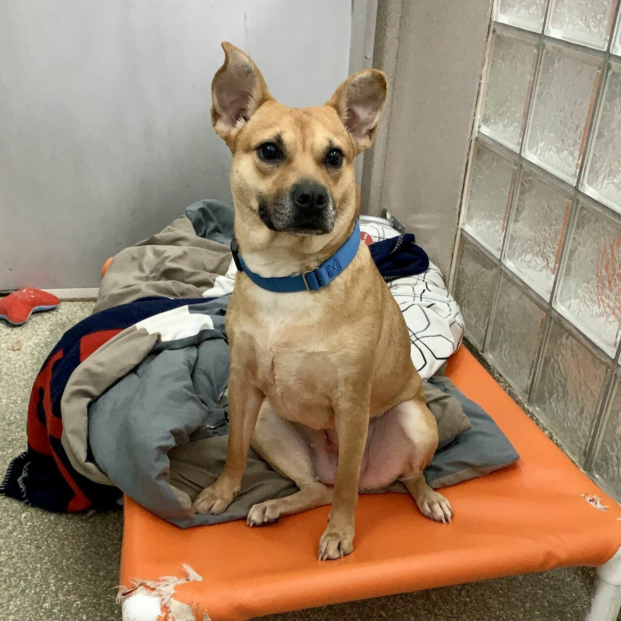 <p><strong>Pet of the Week: Nyla</strong></p> <p>Nyla came to the Humane Rescue Alliance from our partner shelter in Birmingham, Alabama. While we don't know much about her background, we do she is extremely affectionate, wiggly, and friendly. We'd love to help Nyla find a loving home here in the D.C. area where she can relax and continue to work on her confidence. Think this sweet southern girl is the one for you? Meet her at HRA's Oglethorpe Street adoption center.</p>