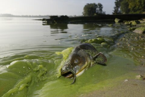 Ohio's toxic algae plan could give other states a blueprint