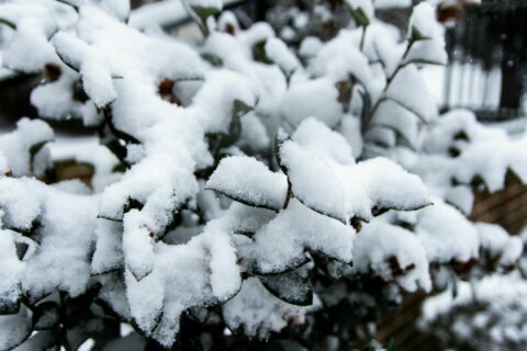 First snow of the year forecast for DC region on Tuesday