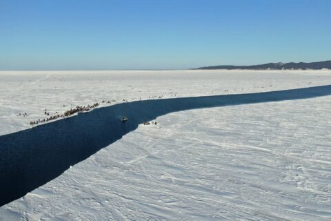 Russia rescues 536 fishermen stranded on giant ice floe