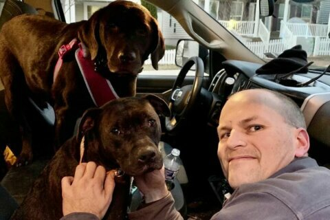 2 dogs that ran off after I-270 crash are reunited with owner